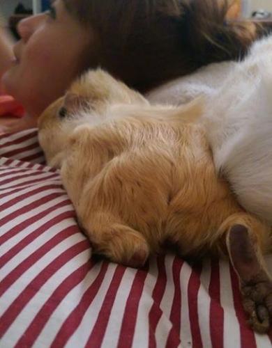 snuggles4